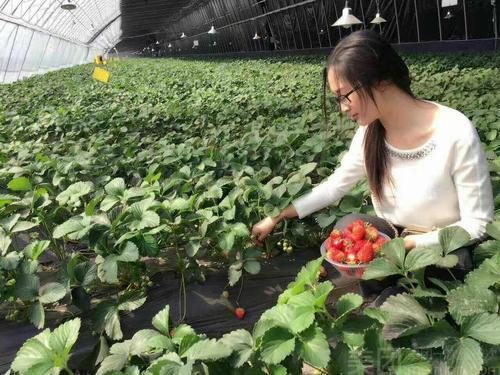 果蔬采摘园
